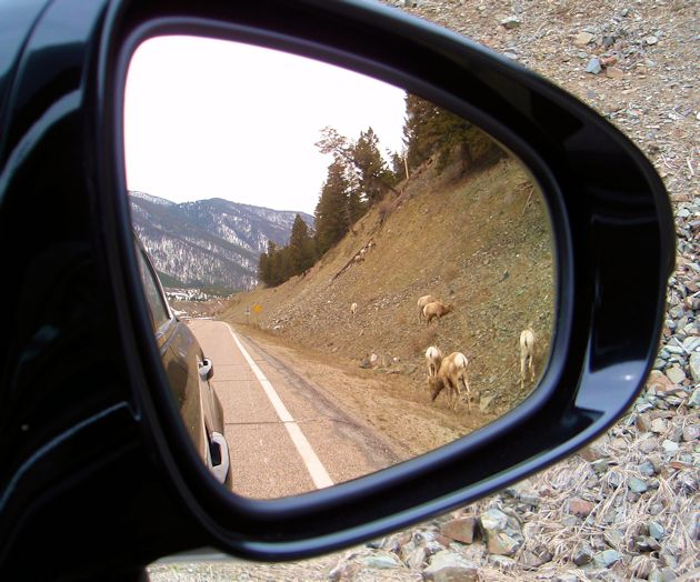 2645 Lexus GS 350 AWD sheep in mirror