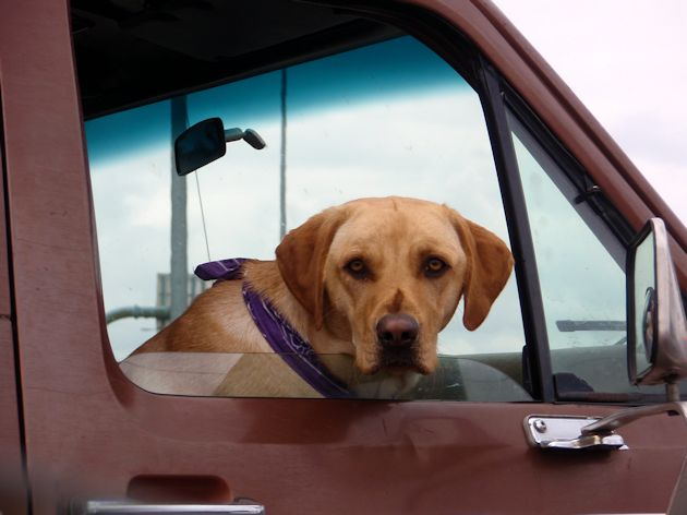 2014 Dog in other truck check out Ram Truck